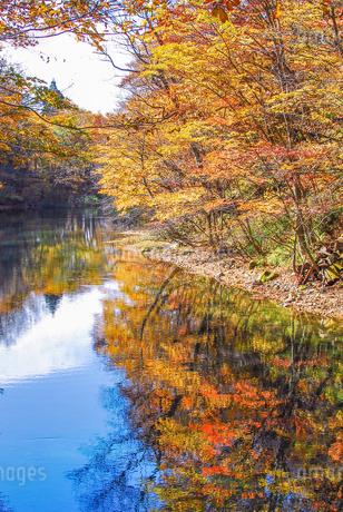 奥入瀬渓流の鮮やかな紅葉の写真素材 [FYI03386918]