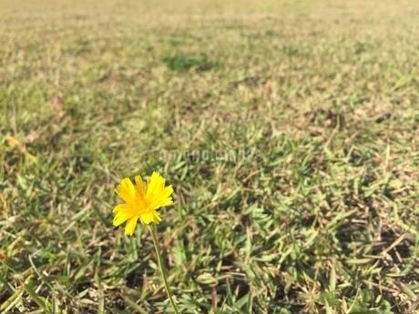 草原の写真素材 [FYI03387007]