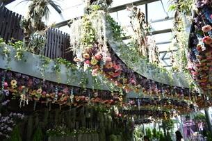 シンガポールのガーデンズバイザベイにあった天井から植えられたカラフルなお花の写真素材 [FYI03387015]