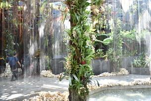 ガーデンズバイザベイの室内で流れる水の写真素材 [FYI03387023]