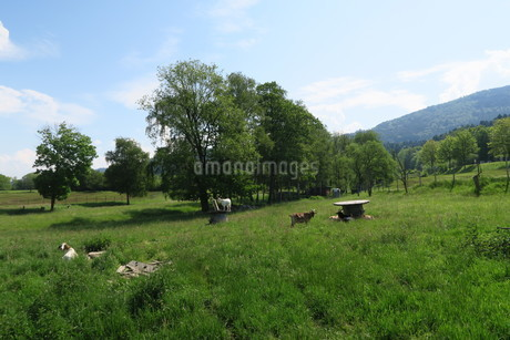 ヤギの放牧地の写真素材 [FYI03387033]