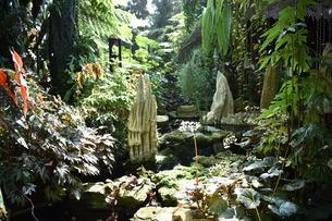 シンガポールのガーデンズバイザベイの室内の森の写真素材 [FYI03387104]
