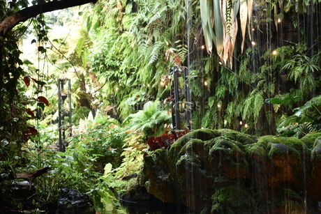 シンガポールガーデンズバイザベイにあった森の写真素材 [FYI03387105]