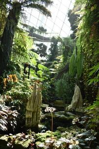 シンガポールのガーデンズバイザベイの室内の森の写真素材 [FYI03387106]