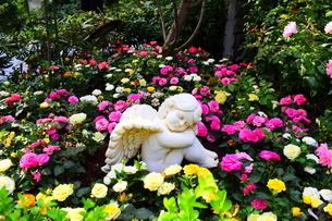 お花畑の天使の写真素材 [FYI03387112]