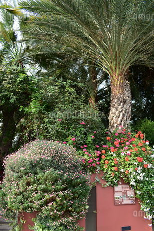 ヤシの木と花々の写真素材 [FYI03387125]