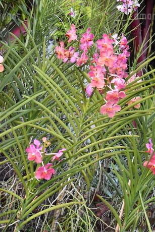 ピンクの花の写真素材 [FYI03387143]