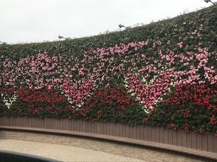 ハートの花の写真素材 [FYI03387156]