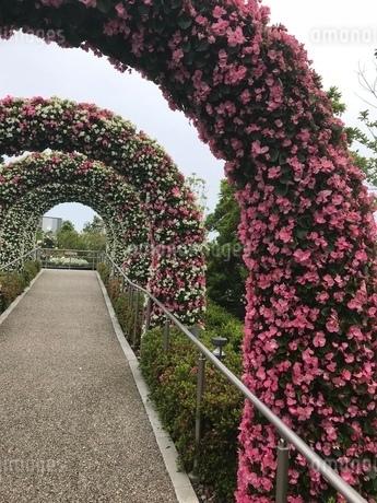 花のアーチの写真素材 [FYI03387157]