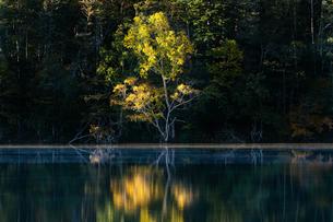 湖面に映る紅葉の写真素材 [FYI03387310]