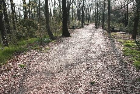 森の道の写真素材 [FYI03387957]