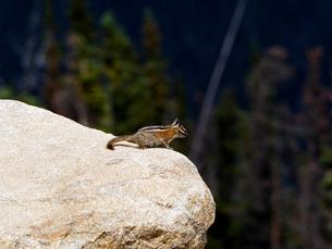 岩の上から遠くを眺めてじっとしているリスの写真素材 [FYI03388365]