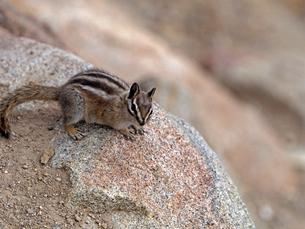 岩の上でじっとしているリスの写真素材 [FYI03388401]