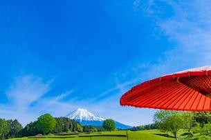 静岡県富士市大淵笹場の茶畑の写真素材 [FYI03388599]