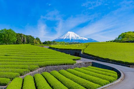 静岡県富士市大淵笹場の茶畑の写真素材 [FYI03388608]