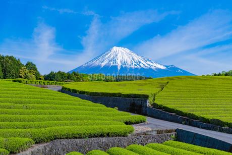 静岡県富士市大淵笹場の茶畑の写真素材 [FYI03388609]