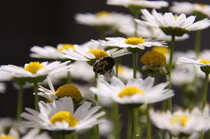 春の花畑の写真素材 [FYI03388661]