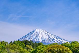 静岡県富士市大淵笹場から見た富士山の写真素材 [FYI03388662]