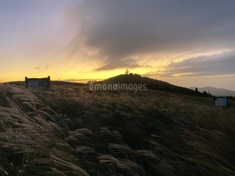 夕日とススキの写真素材 [FYI03388905]