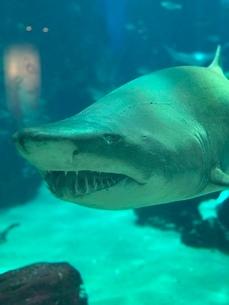 サメの素材の写真素材 [FYI03389020]