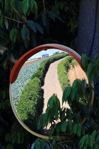 田園風景の写真素材 [FYI03389223]