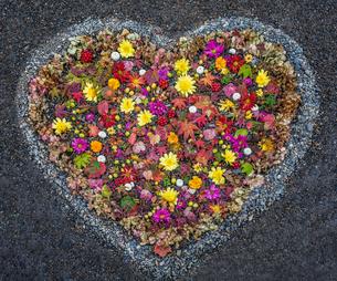 小石で形どられたハートと秋の植物のアレンジメントの写真素材 [FYI03389228]