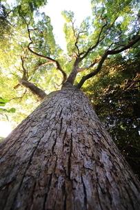 大樹の写真素材 [FYI03389240]