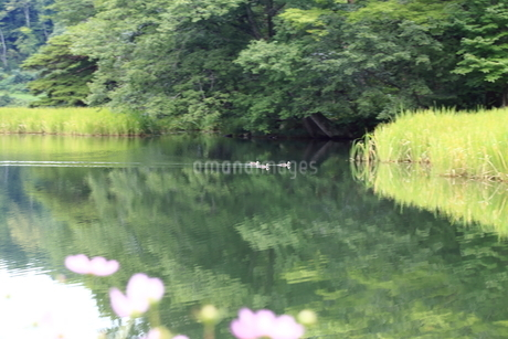 湖畔の写真素材 [FYI03389242]