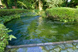 阿蘇の名水百選 白川水源の写真素材 [FYI03389249]