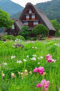 春の白川郷の写真素材 [FYI03389312]