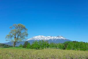 新緑の開田高原の写真素材 [FYI03389334]