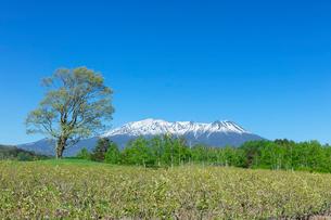 新緑の開田高原の写真素材 [FYI03389339]