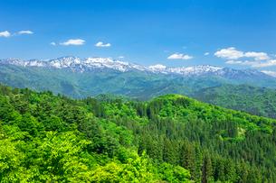 新緑の白山の写真素材 [FYI03389349]