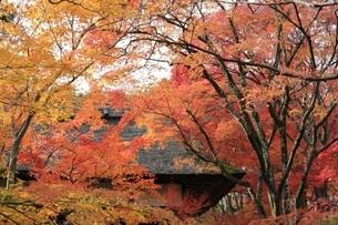 常寂光寺 jojakko-ji 日本 京都府 京都市の写真素材 [FYI03389892]