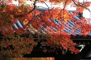 龍安寺 日本 京都府 京都市の写真素材 [FYI03389893]
