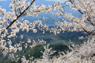 吉野山 日本 奈良県 吉野町の写真素材 [FYI03389897]