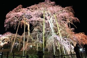 花 夜の写真素材 [FYI03389906]