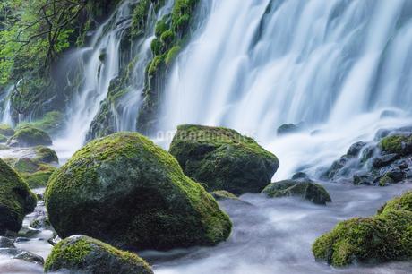 元滝伏流水 日本 秋田県 にかほ市の写真素材 [FYI03390022]