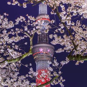 浅草、隅田公園 日本 東京都 台東区の写真素材 [FYI03390076]