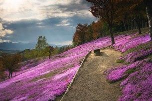 滝上芝ざくら公園 日本 北海道 滝上町の写真素材 [FYI03390118]