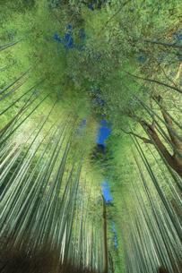 嵐山 竹林 日本 京都府 京都市の写真素材 [FYI03390221]