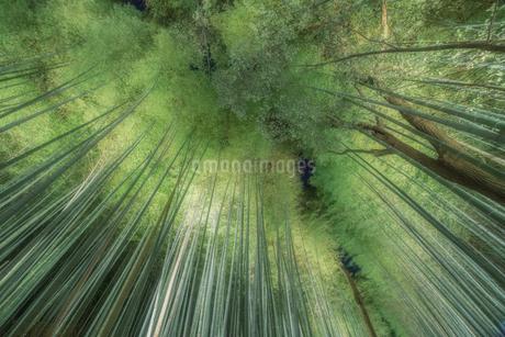 嵐山 竹林 日本 京都府 京都市の写真素材 [FYI03390223]