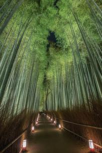嵐山 竹林 日本 京都府 京都市の写真素材 [FYI03390224]