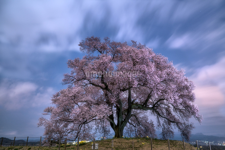 わに塚の桜 日本 山梨県 韮崎市の写真素材 [FYI03390242]