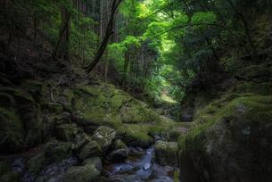 赤目四十八滝 日本 三重県 名張市の写真素材 [FYI03390254]