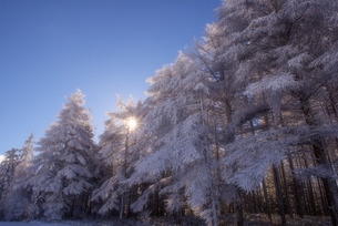 高ボッチ山 日本 長野県 岡谷市の写真素材 [FYI03390263]