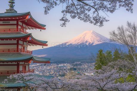 新倉山浅間公園 日本 山梨県 富士吉田市の写真素材 [FYI03390299]