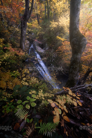 宇津江四十八滝公園 日本 岐阜県 高山市の写真素材 [FYI03390302]