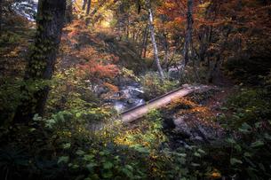 宇津江四十八滝公園 日本 岐阜県 高山市の写真素材 [FYI03390314]