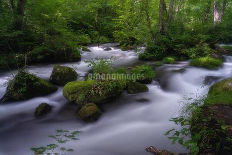 奥入瀬渓流(Oirase River) 日本 青森県 十和田市の写真素材 [FYI03390315]